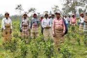 Die Arbeit der Jesuiten in Matigara, Siliguri, bei Bagdogra im Destrikt Darjeeling, Indien - Arbeiter auf einer Teeplantage in der Nähe der Schule Loyola High School in Uttar Salbari (Kelabari) Distrikt Jalpaguri Fotografien aufgenommen vom 9.3.2014 bis 14.3.2014 von Christian Ender