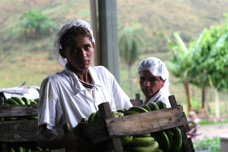 Arbeiter auf einer Bananenplantage in Brasilien